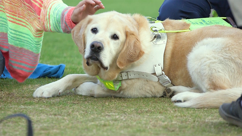 Guide Dogs Behind the Scenes